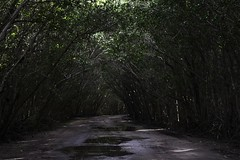 Out of the Woods Yet (Vivi_Barros) Tags: park wood light usa beach nature forest out photography woods florida miami wildlife hammock tropical hiding vivi coralgables barros outofthewoods floridanature taylorswift hammockpark vivibarros vivisalvador