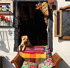 Ouro Preto 2015 (Pablo Grilo) Tags: dog minasgerais mg cachorro ouropreto barroco aleijadinho cidadeshistoricas iphone6