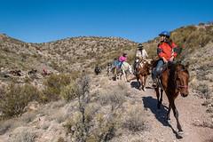 Trail Ride (G Thornwall) Tags: trailriding tucsonarizona tucsonsaddleclub