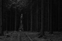 Daydreams (Netsrak) Tags: trees light bw tree nature forest germany dark way de landscape outside deutschland licht blackwhite woods nikon ast branch darkness outdoor path branches natur ste landschaft wald bume baum nordrheinwestfalen weg badmnstereifel d3200