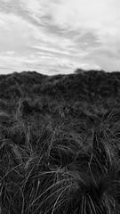 Moody (paul_labete) Tags: ireland blackandwhite beach grass wexford curracloe galaxys5