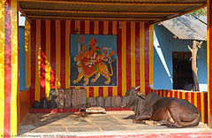 """HOLY COW !"" (GOPAN G. NAIR [ GOPS Photography ]) Tags: street india temple photography cow photo holy hindu hampi gops gopan gopsorg gopangnair gopsphotography"