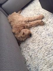 Liesel and Nolan's little boy has found his favorite sleeping spot!