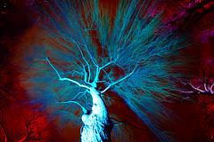 live tree (christophhornung142) Tags: red green rot colors yellow night licht ast purple nacht sony illumination gelb veins blau wald farbe bume mannheim zwei violett zweige haste luisenpark langebelichtung strucher adern venene winterlichter sonyalpha6000 stimmunglichtknstler