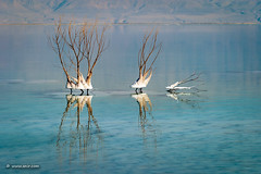 Life In The Dead Sea (xnir) Tags: landscape israel nir xnir nirbenyosef