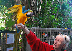 Key West (Florida) Trip 2015 0288Ri 5x7 (edgarandron - Busy!) Tags: bird birds keys florida parrot keywest cockatoo macaw floridakeys nancyforrester