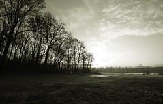 Field research (M a u r i c e) Tags: trees sky holland nature netherlands sunrise landscape limburg efs1022mm