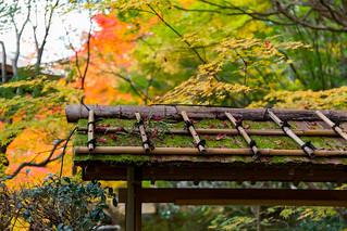 紅葉 - 南禅寺天授庵 / Tenjyu-an Nanzen-ji Temple
