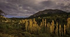 Otoo (Netwalkers) Tags: verde amarillo nubes otoo otoal