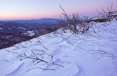 Winter Morning on Jane Bald (R. Keith Clontz) Tags: pinksky wintermorning mountmitchell roanmountain mountainridges blackmoutains rkeithclontz janebals roanvalley snowdriftbirch