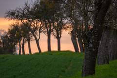 Entlang des Weges (thunderbird-72) Tags: france abend frankreich sonnenuntergang lorraine fr bume spaziergang abendrot abendstimmung coucherdusoleil abendlicht lothringen launstroff steineandergrenze nikond7100 alsacechampagneardennelorraine alsacechampagneardennelorrain