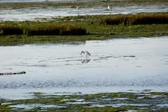 DSC01023 (hofsteej) Tags: lagune nature lagoon morocco maroc atlanticocean oualidia