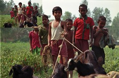 walk (a stage) Tags: travel nature analog canon asia walk islam gang backpacking journey analogue agriculture analogphotography bangladesh journalism chars bangla travelphotography colorfilm jamuna riverisland chidhood originalphotography asiaonfilm hannesherbst subjectivejournalism