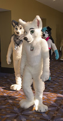 _DSC9446 (Acrufox) Tags: midwest furfest 2015 furry convention december hyatt regency ohare rosemont chicago illinois acrufox fursuit fursuiting mff2015