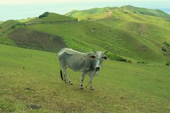 North batan  (gms<) Tags: summer color nature cow hills batanes naturelovers wowphilippines