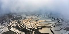 *Light @ Shadow* (albert.wirtz) Tags: china mist water fog sunrise nebel ngc wolken yunnan sonnenaufgang paddyfields yuanyang morgenstimmung d810 reisterrassen terracedricefields nikond810 nikkor2470f28vr albertwirtz
