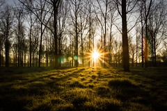 Sitting in the woods (dandavidson7) Tags: nature sunrise lens woods poplar dew plantation flare sunburst milton keynes sunbeam