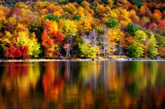 Playful reflections of Fall (Captions by Nica... (Fieger Photography)) Tags: autumn trees lake canada reflection tree fall nature water colors forest reflections landscape colorful bright quebec outdoor autumncolors fallfoliage foliage serene 2015