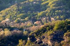 FEM_9133m (MILESI FEDERICO) Tags: travel wild italy panorama detail nature sunrise landscape nikon europa europe italia alba details nat natura piemonte dettagli alpi piedmont paesaggio valsusa dettaglio 2016 nital valdisusa milesi alpicozie valledisusa d7100 visitpiedmont valliolimpiche nikond7100 milesifederico