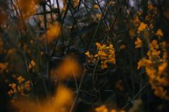Protezione (Davide Bon) Tags: flowers storm colors field rain nikon mood 3518 35mm18 vsco nikond7100 vscofilm