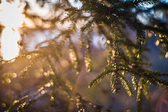 Evergreen (Evan's Life Through The Lens) Tags: camera blue sunset orange sun lake cold color green beach water glass beautiful vintage lens focus friend afternoon waterfront purple minolta bright bokeh walk vibrant f14 sony side sunny front hike lakeside adventure shallow 58mm a7s