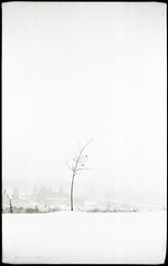 On Finn Hill, Sault Ste. Marie (~ Nando ~) Tags: winter snow ontario canada tree 120 film monochrome analog mediumformat landscape wind kodak outdoor voigtlander bessa trix rangefinder 6x9 mf analogue soo expired negativescan folder ilford rf saultstemarie 131 northernontario heliar algoma prewar f35 105mm uncoated vuescan epsonv700 finnhill 105cm ilfotechc