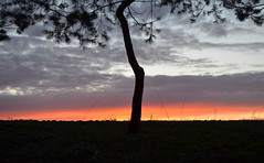 (Sunofmarch) Tags: trees light sky colour clouds d5100