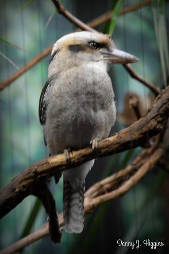 Henry Vilas Zoo, Madison, Wisconsin.DSC_6324