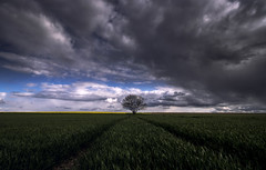 Bad weather on its way . . . (-SebsTian-) Tags: trees light tree nature weather clouds outside cloudy sony wolken 1750 tamron wetter wolkig a58