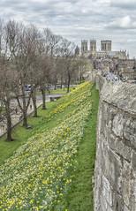 York_20160408_3684 (Rural Dave) Tags: york landscapes cityscape yorkshire citywalls minster