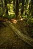 If a tree falls in the bush... DSC05403-18 (jasonclarkphotography) Tags: newzealand christchurch sony tasman nex nelsonlakesnationalpark canterburynz lakerotoroa nex5 jasonclarkphotography
