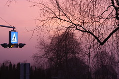 Nature's TV: Pink (Cobra_11) Tags: morning winter light sky sun tree sunrise canon licht himmel sonne sonnenaufgang canoneos morgen baum ef50mmf18ii ef50mm118ii canoneos450d digitalrebelxsi