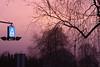 Nature's TV: Pink (Cobra_11) Tags: morning winter light sky sun tree sunrise canon licht himmel sonne sonnenaufgang canoneos morgen baum ef50mmf18ii ef50mm118ii canoneos450d digitalrebelxsi