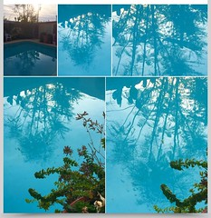 Reflections of Jacaranda tree in pool. (chicbee04) Tags: blue green water pool collage reflections afternoon mosaic h2o jacarandatree syrianoregano iphoneography eventile