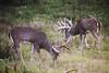 Michigan Whitetail Hunt 20