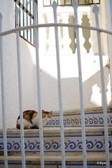 Kitty (Kym.) Tags: stairs cat walking spain gate walk kitty porch andalusia nerja thegang andalucia otherpeoplesgang