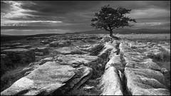 Lone tree above Langcliffe bw (*sarah*.) Tags: blackandwhite tree monochrome outdoor yorkshire limestone fujifilm
