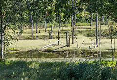 IMG_0033 (zeninmotion) Tags: trees green water rural outside outdoors indiana farmland swamp yuck slime stagnent