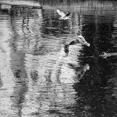 Kurbagalidere - II (esintu) Tags: blackandwhite seagulls reflection water turkey river flying ripple seagull wave bubbles istanbul gas pollution bubble waste sewer kadikoy polluted sewege kurbagalidere