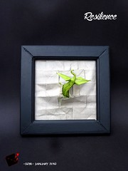 resilience (-sebl-) Tags: plant elephant wall paper origami hide challenge resilience sebl