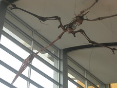 IMG_4237 (FigmentJedi) Tags: minnesota dinosaurs sciencemuseumofminnesota