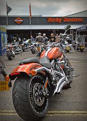 Tangerine Dream... (Harleynik Rides Again.) Tags: harley hd davidson breakout cvo tangerinedream nikondf harleynikridesagain