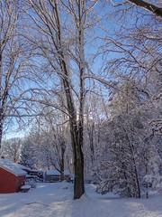 DSC01627-2 (johnjmurphyiii) Tags: winter usa snow connecticut shelly cromwell originaljpeg johnjmurphyiii 06416 sonycybershotdsch90