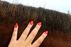 You gave me chills (everlastmoments) Tags: red wild horse brown nature colors girl animal hair fur rojo hand touch nails mano nailpolish feelings uas chills wildness