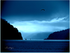 most things are better blue........ (calamityjan2008) Tags: blue trees winter light bird water clouds boat scenery bc vancouverisland inlet fjord flyingbird betterinblue bluescene boatcomingfromafar