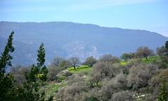 Early spring in the lower Galilee (noam_adir) Tags: israel spring galilee carmelmountain