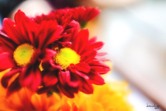 Flowers for a Rainy day... (Daniel Y. Go) Tags: flowers fuji philippines x100t fujix100t