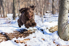 Wonder dog (sevemiller) Tags: snow nature newjersey charlie southmountainreservation
