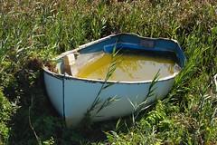 Danmark - Vejlby Klit (moraal23) Tags: boot boat danmark schilf klit regenwasser vejlby
