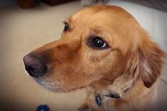 4 Years (Sautterry) Tags: dog animals southcarolina gritt caseybelle
